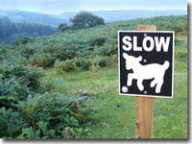 Spring lamb warning sign
