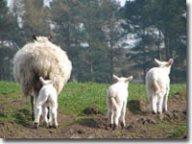 Spring triplets