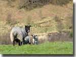 Goathland locals