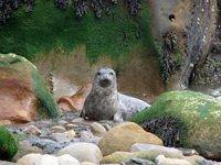 Ravenscar seals